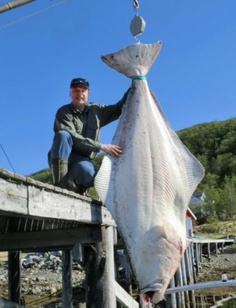 Trophy Halibut